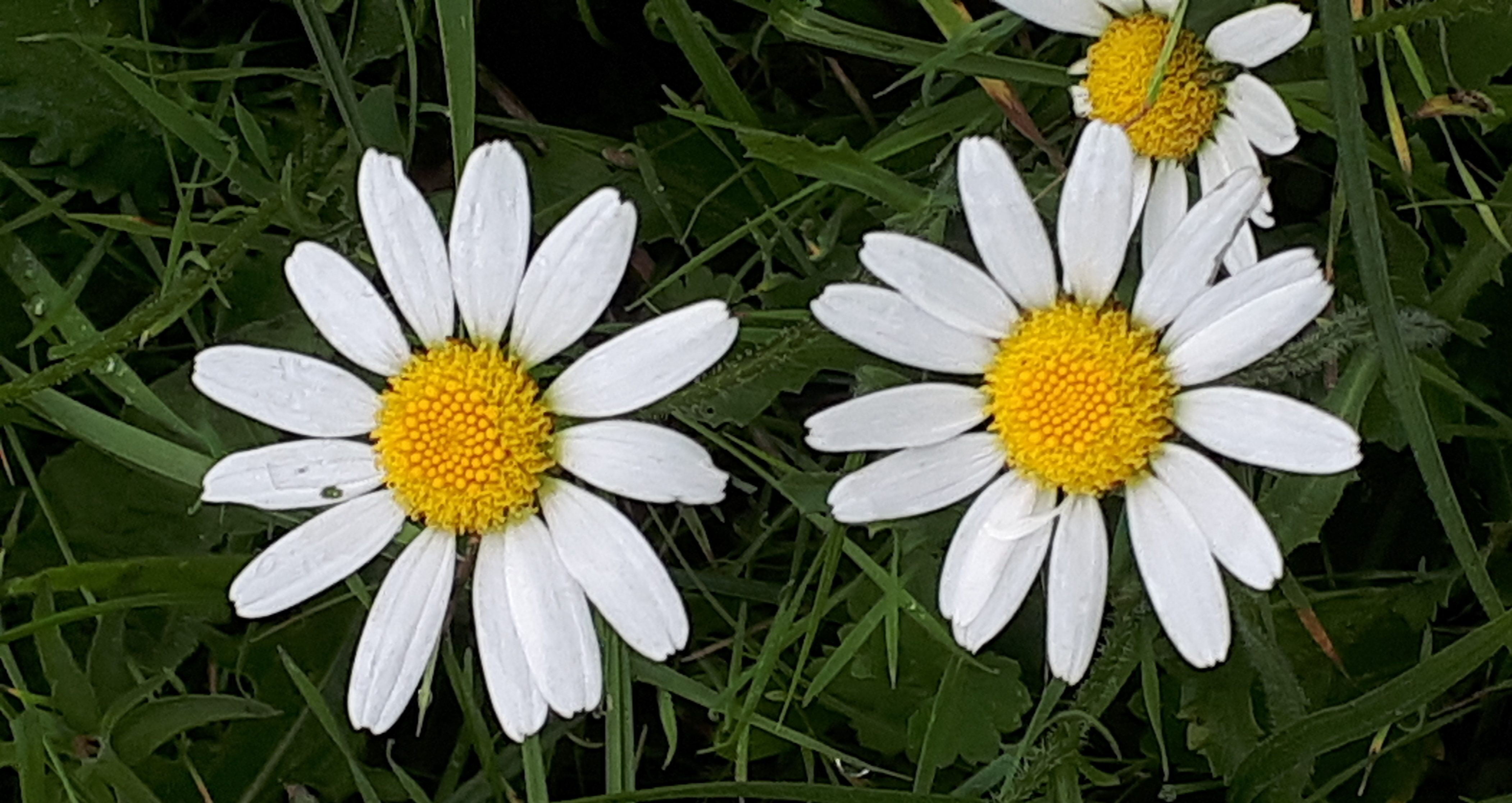 September meadow flowers