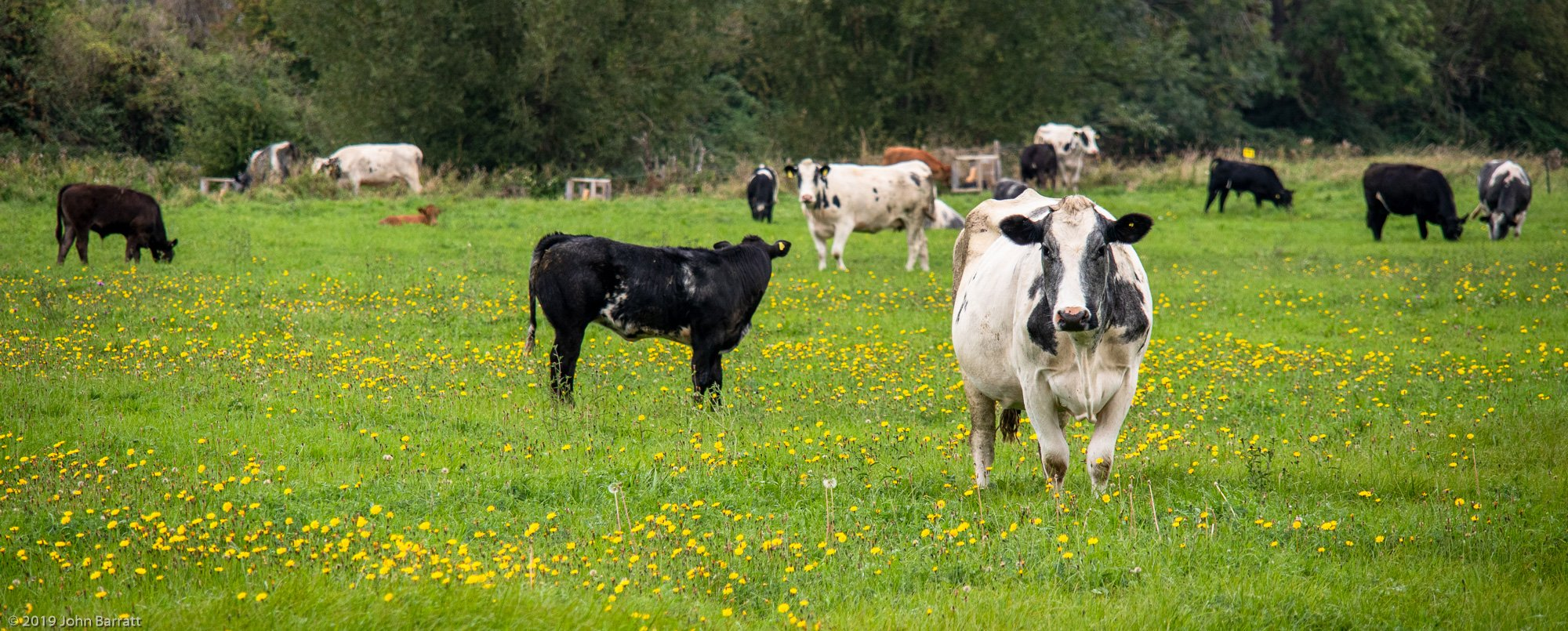Grazing of North Meadow Started On 9th September