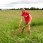 Scything on North Meadow