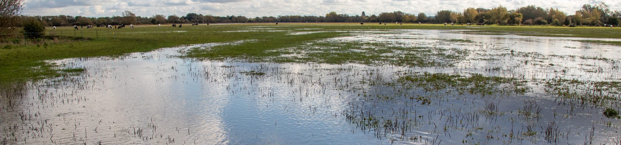 Flooding on North Meadow